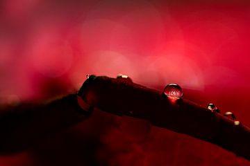Love valentine van Patrick Strik
