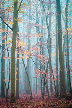 Mist in het Harz-woud van Martin Wasilewski