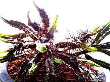 Kamerplant: SciFi Cactus 2 - 1 van MoArt (Maurice Heuts)