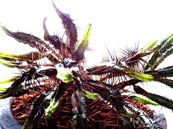 Kamerplant: SciFi Cactus 2 - 1