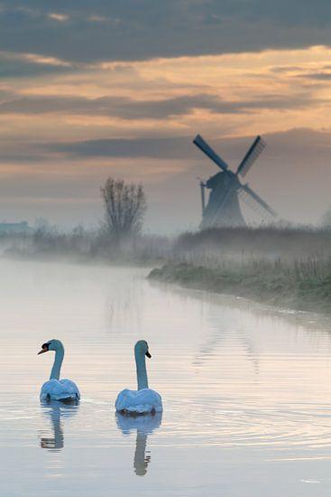 Zwemmen naar de molen