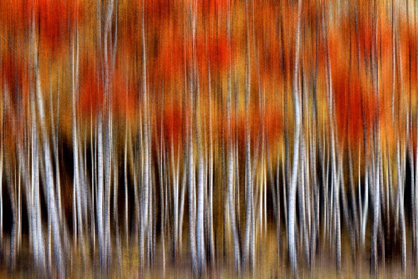 Berken abstract van Lars van de Goor