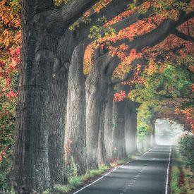 Forest trees van Niels Barto