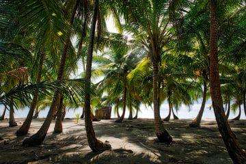Tropischer Palmenstrand von Roel Beurskens