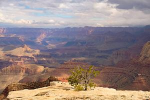 Big things often have small beginnings, Grand Canyon