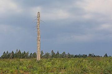 Dode boom in een Ardeens landschap van Kristof Lauwers