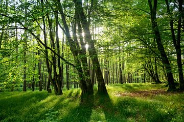 Frühlingswald von Claudia Evans