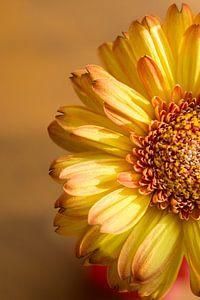 De zonnige kant van een bloem