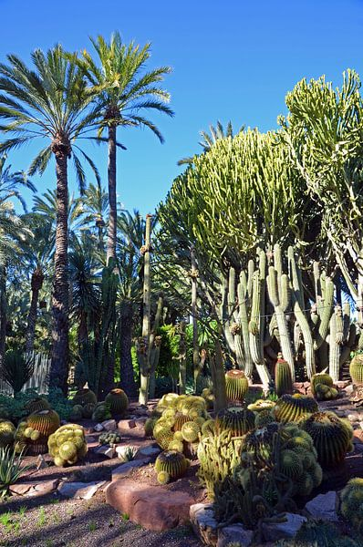 Palmbomen en cactussen in park Palmeral in Elche van Gert Bunt