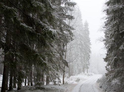 Zweeds winterbos