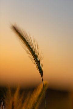 Silhoutte eines Chores während der goldenen Stunde im Sommer von Kim Willems
