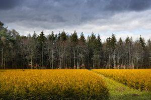 Zandoerlesche bossen Noord Brabant met ree aan bosrand. van Marianne van der Zee