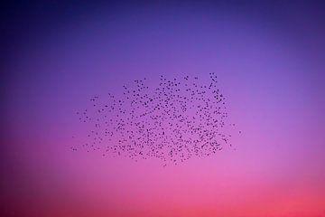 Flug der Vögel in farbigen Abendhimmel von Noud de Greef