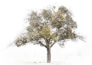 winterse boom met maretak van Guido Rooseleer