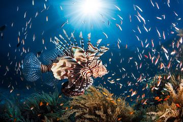 Lionfish, Barathieu Gabriel van 1x