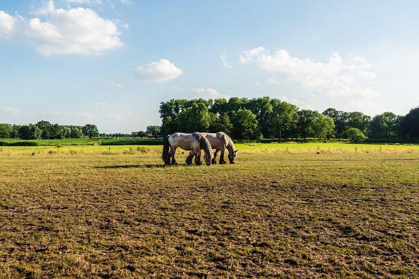 Belgische Trekpaarden in de Wei van Brian Morgan
