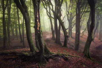 Magic in the forest von Edwin Mooijaart