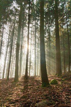 Bos in het ochtendlicht van Jens Hertel