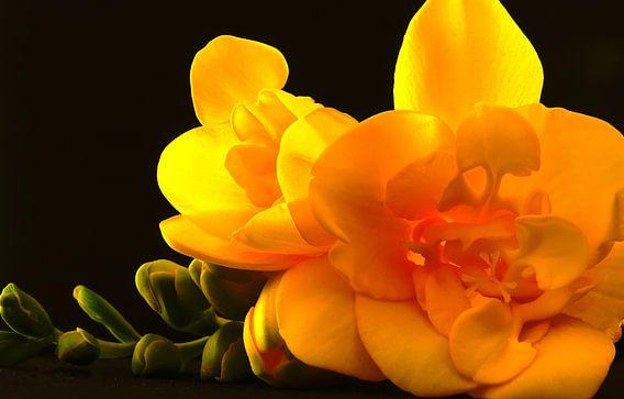 yellow flower van Dirk van Egmond
