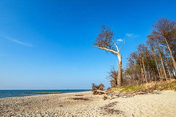 Landschaft an der Küste der Ostsee in Graal-Müritz von Rico Ködder