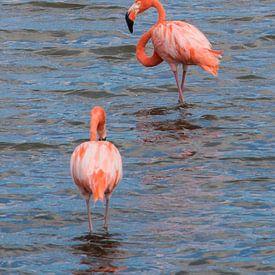 Flamingo's van Bonaire van Verita Fotografie