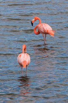 Flamingo's van Bonaire van Aukelien Minnema