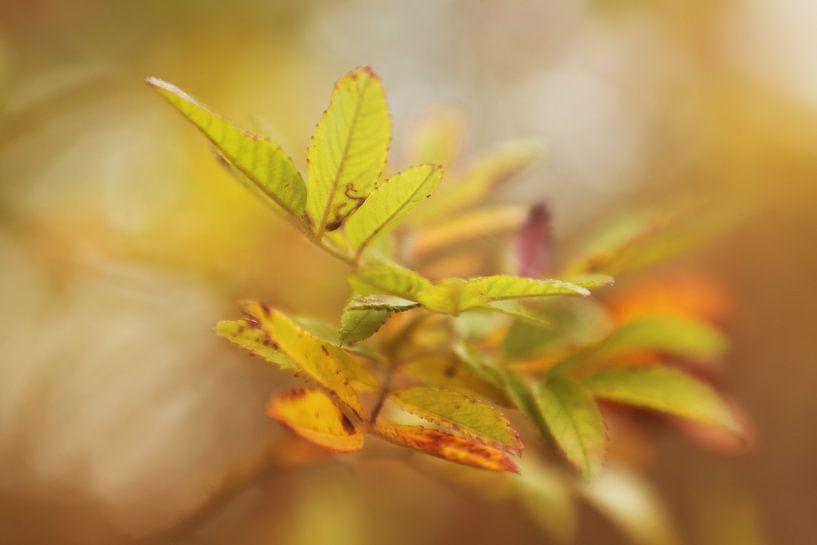 Herfstblaadjes van LHJB Photography