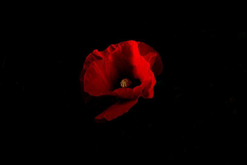 rode klaproos met zwarte achtergrond van Renske Breur
