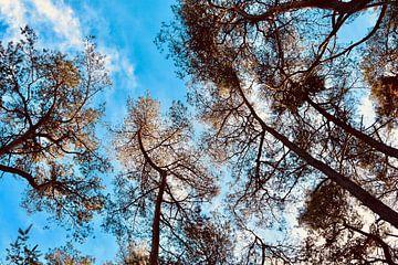 Bomen van Myrthe Visser-Wind