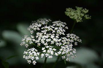 Wilde Blume von Michael van Eijk