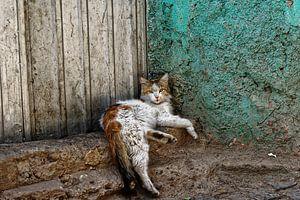 abbesinian kat
