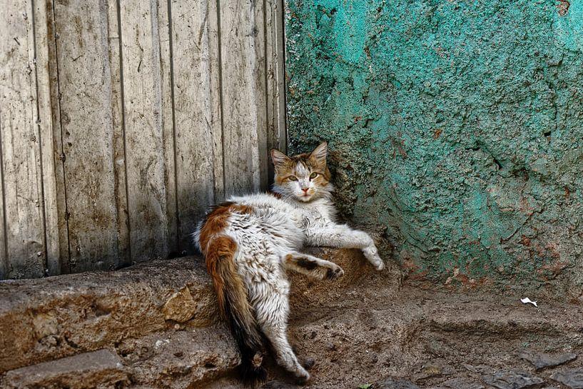 abbesinian kat van rene schuiling