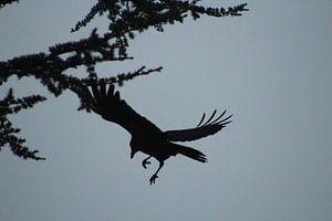 vogel in de aanval van