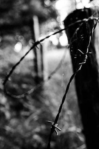 Barb Wire van Sander Strijdhorst
