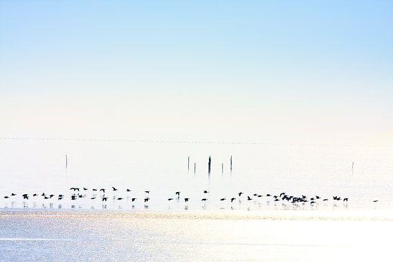 Winter ganzen bevroren ijs van Jan Brons