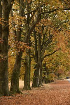 Onder de grote, herfstige bomen