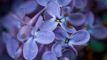 Paarse bloemen van dichtbij. van Ronald van der Zon