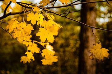 Letzte Blätter des Herbstes von Linsey Aandewiel-Marijnen
