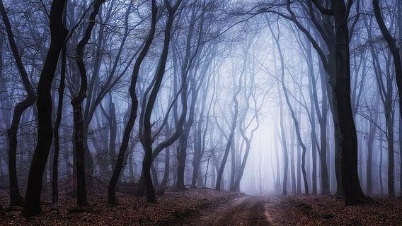 Het licht van Lothlorien van Tvurk Photography