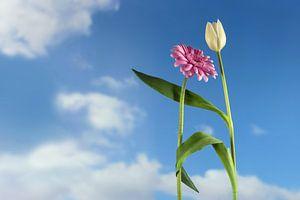 Dansende bloemen, een witte tulp en een roze gerbera dansen samen op een lente- of zomerfeest, in Eu van Maren Winter