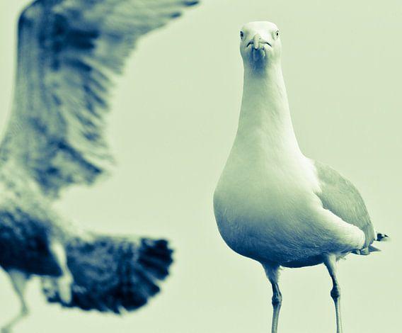 Sea birds van Anne Koop