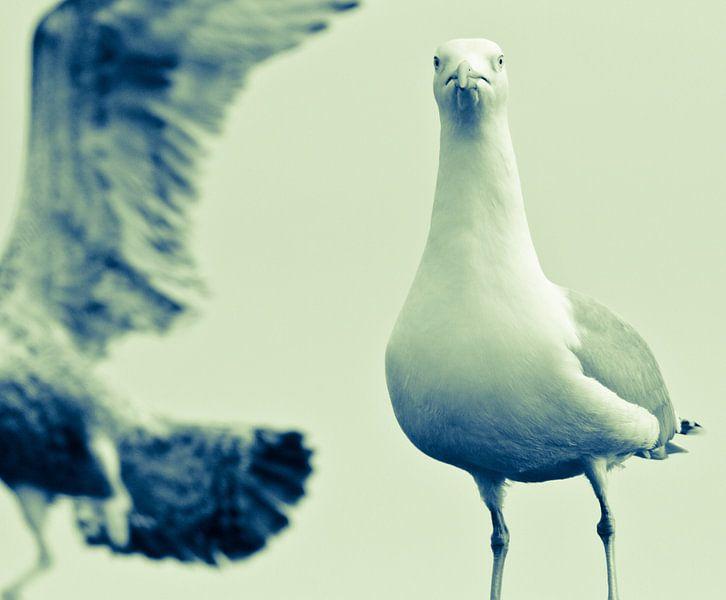 Sea birds von Anne Koop