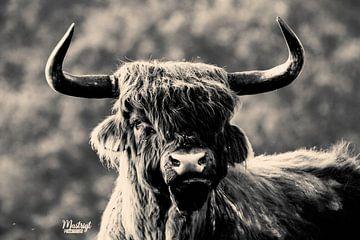 Schottische Hörner von Bart van Mastrigt