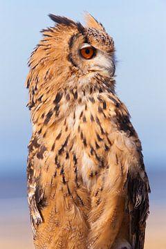 Uil 3 (Owl) van Brian Morgan