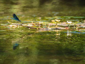 Libelle von Hennie Zeij