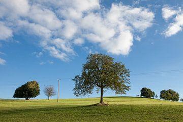 Rustgevend groen landschap met helder blauwe lucht van