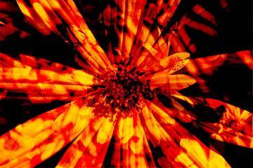 Zonnehoed, bloemen, abstract, (Rudbeckia fulgida) van Torsten Krüger