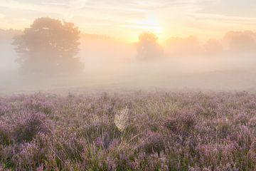 spinnenweb in de mist von Francois Debets