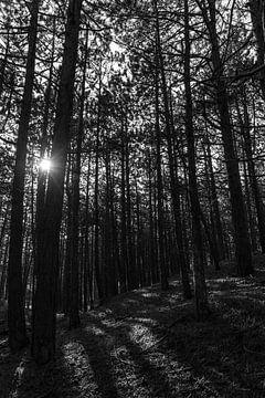Terschelling Wald von IvanHees_fotografie