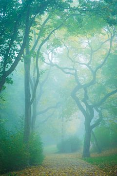 Herfst in het park van Martin Wasilewski